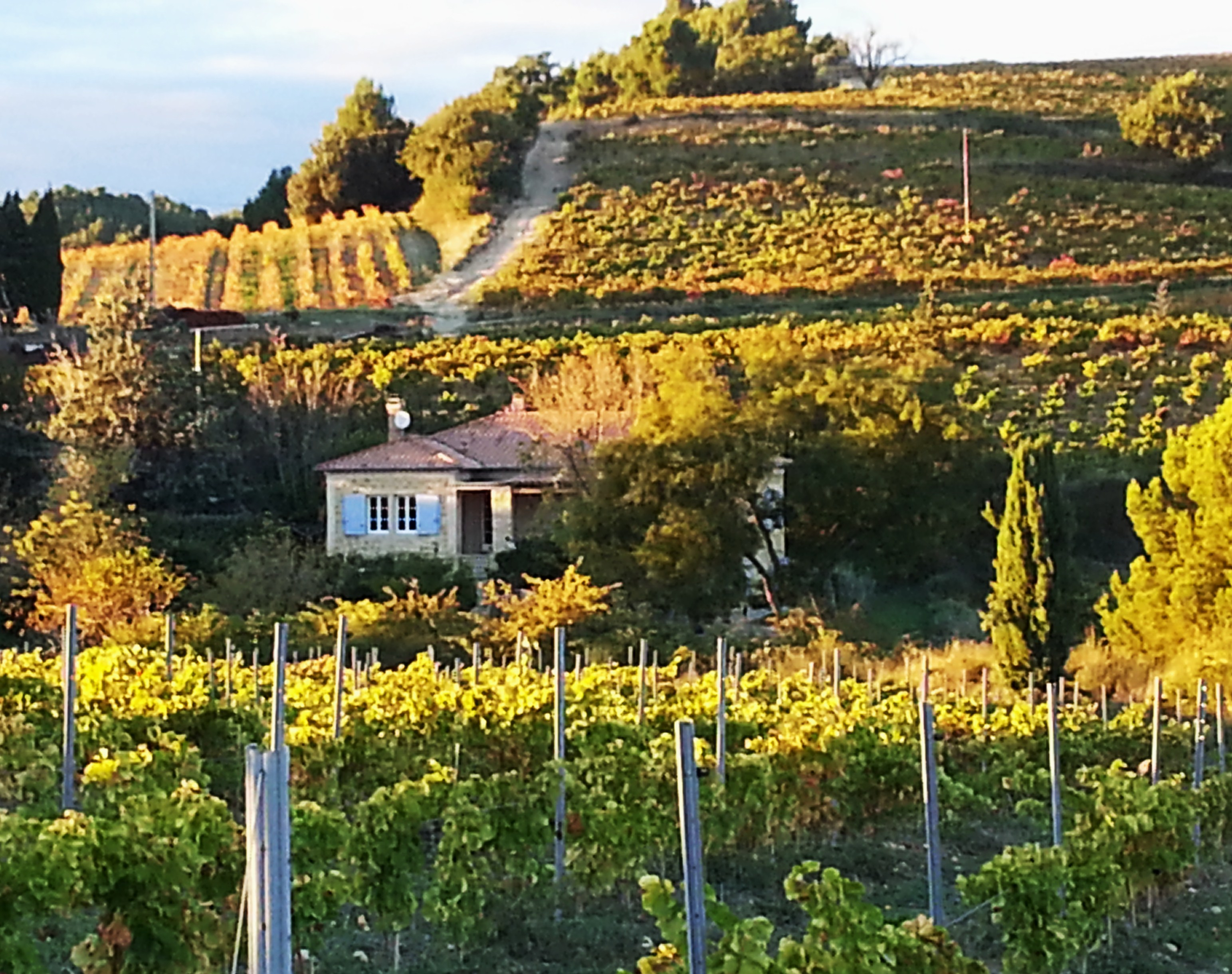 surrounded by vineyards..in evening light